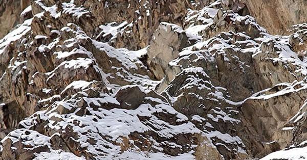 Тест: попробуйте найти животных на этих 15 фотографиях