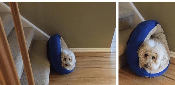 собаки-которые-смущены-происходящим-10