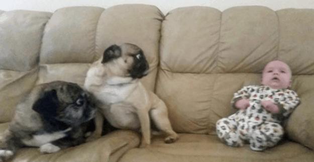 собаки-которые-смущены-происходящим-2