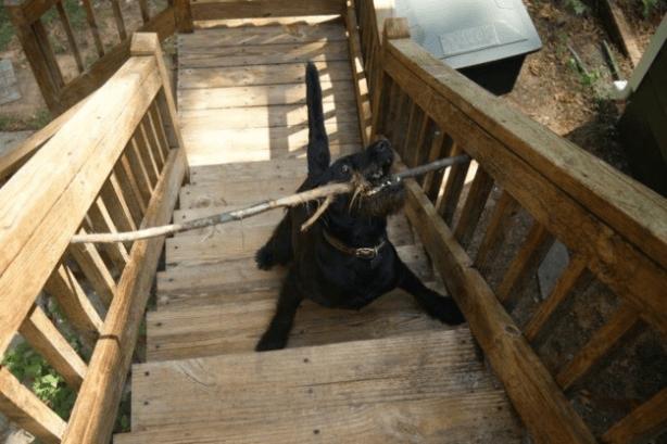 собаки-которые-смущены-происходящим-3