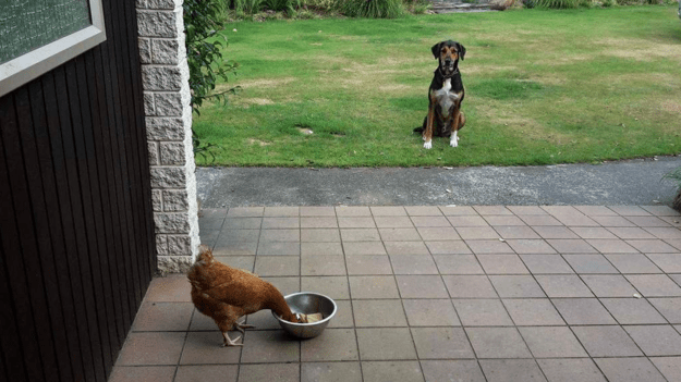 собаки-которые-смущены-происходящим-5