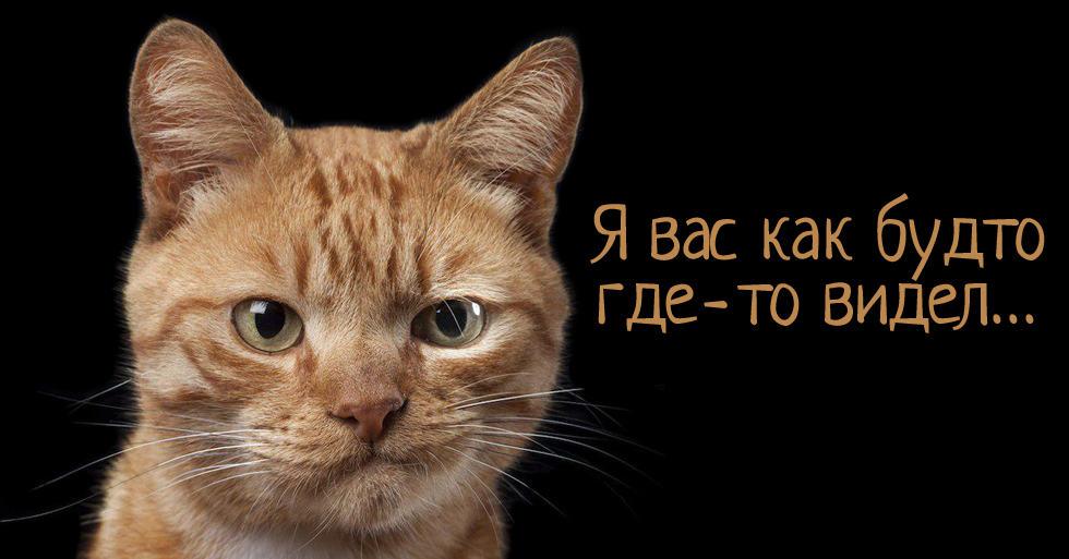 Тест: Угадай фильм по котику