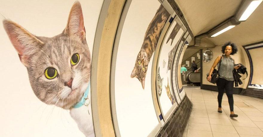 На станции метро в Лондоне всю рекламу заменили на котиков