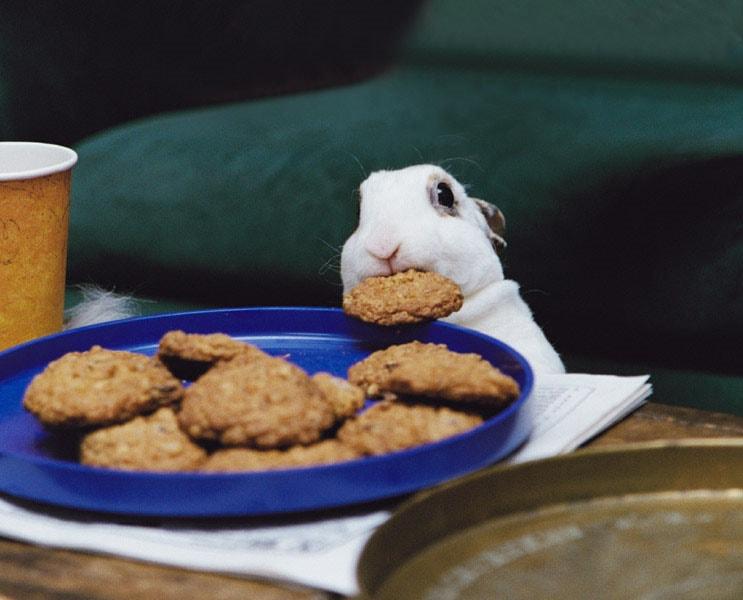 cookiethief-rabbit