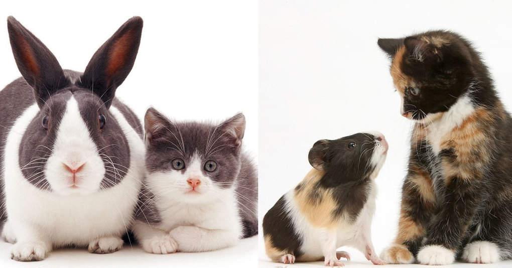15 животных братьев из разных семей