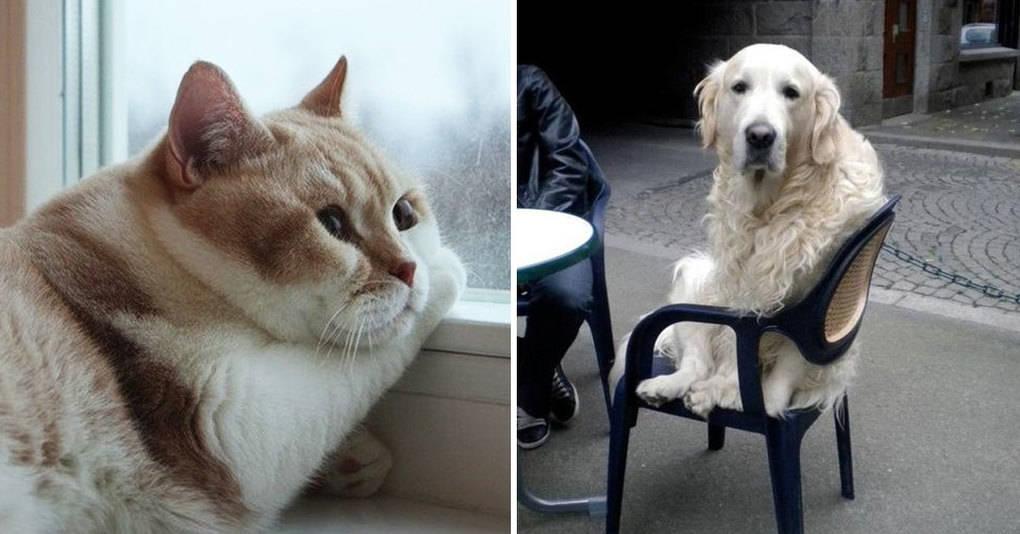 33 кошки и собаки, которые больше не хотят никого видеть
