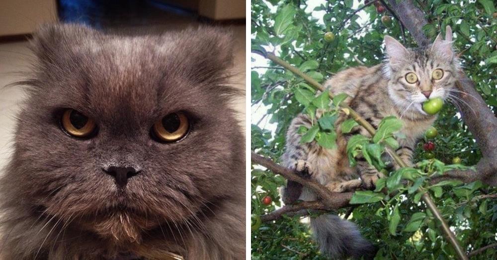 15 котов, которых забыли покормить, и очень зря