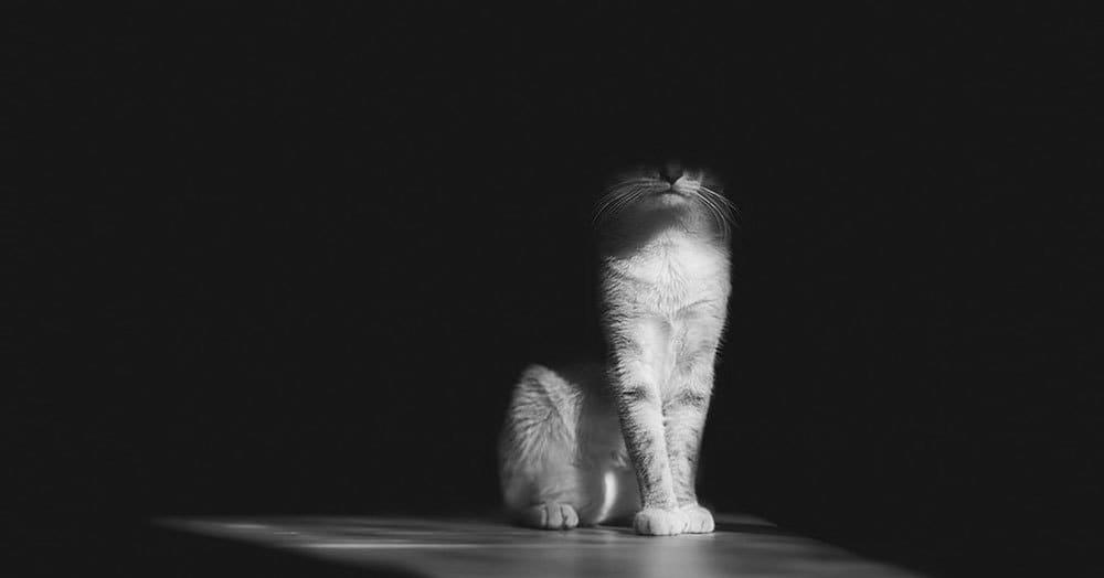 Загадочная и таинственная жизнь кошек в черно-белых фотографиях