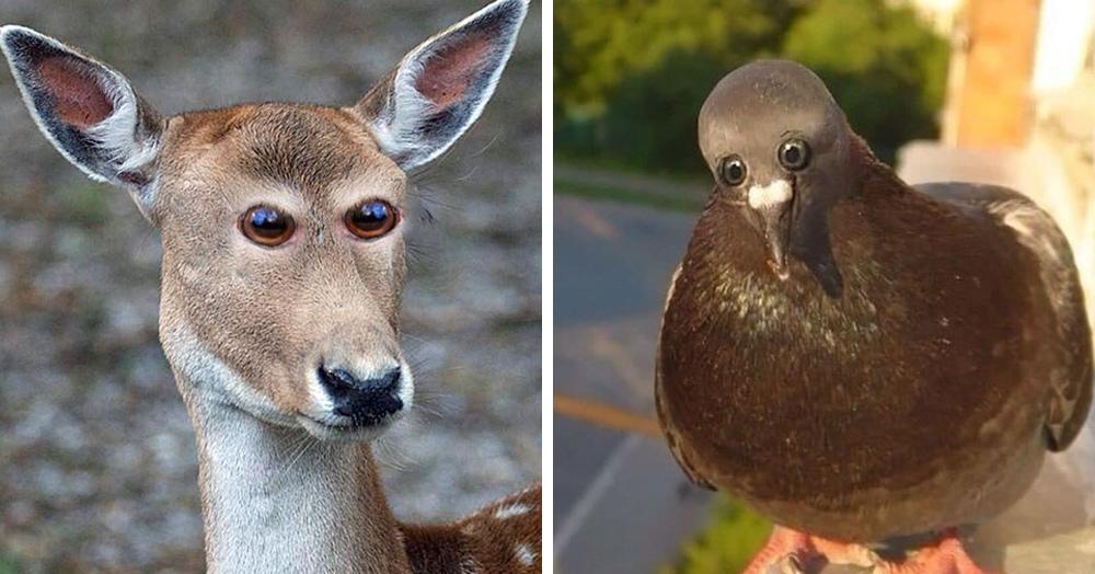 Как выглядели бы животные, если бы их глаза были расположены спереди