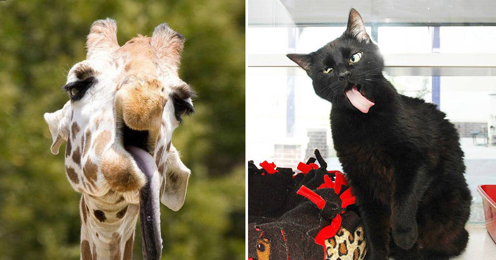 15 животных, которым карьера фотомодели явно не светит