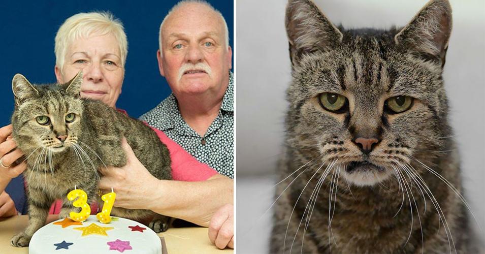 Самый старый кот в мире отметил очередной День рождения