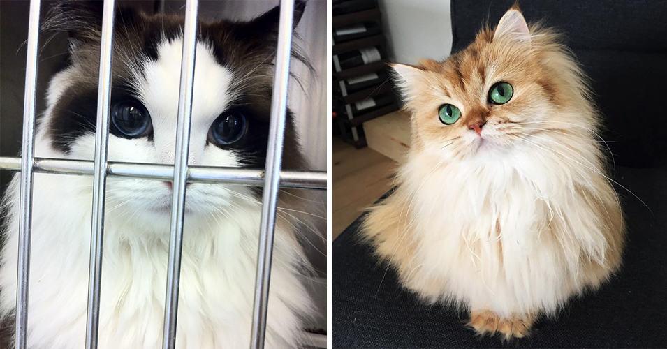 20 кошек, на которых вы не сможете смотреть без восхищения