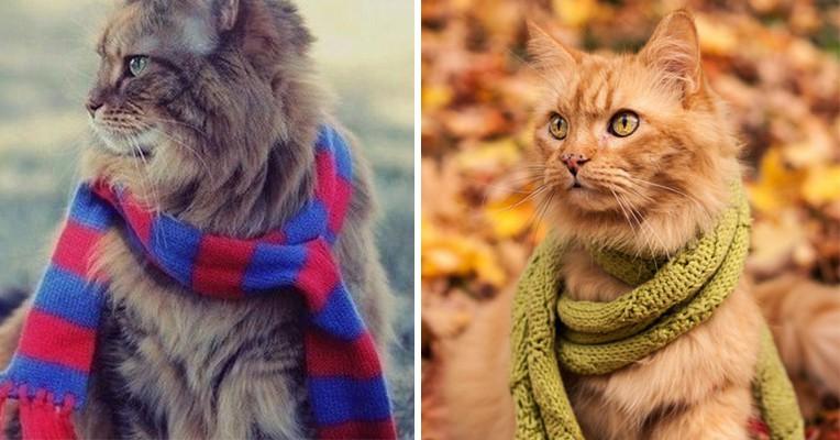 15 очаровательных котиков, которые тоже хотят погреться холодной осенью