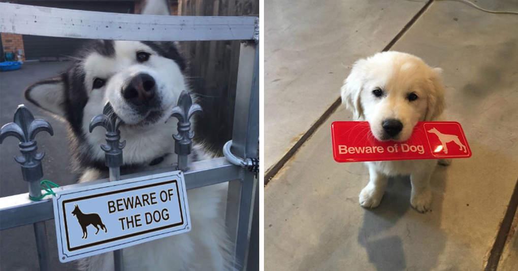 18 «очень злых» собак, которых можно обнаружить за предупреждающей табличкой