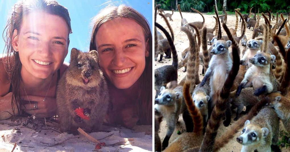 19 мест на Земле, которые должны посетить все любители животных