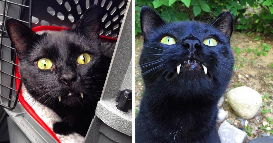 Женщина спасла кота, который оказался «вампиром»