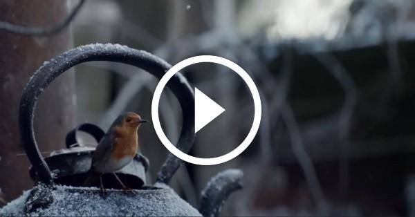 Самый трогательный рождественский ролик, который назвали лучшим видео этого года