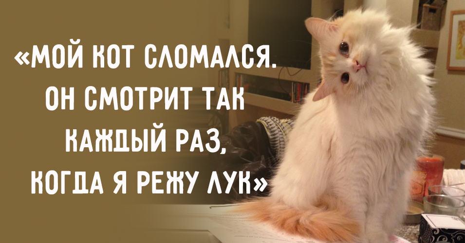 15 котиков, которые время от времени совершают ну очень странные действия