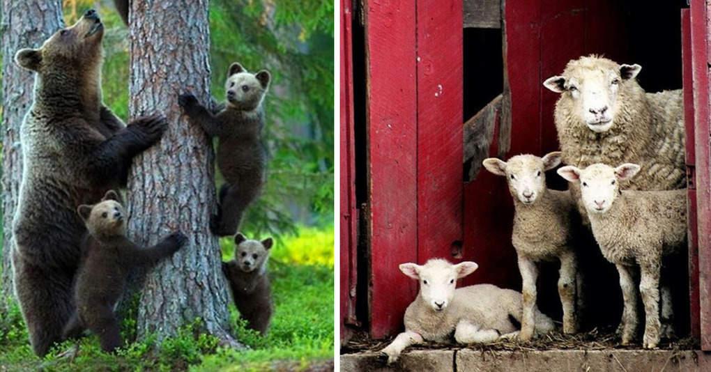 17 великолепных семейных фотографий животных