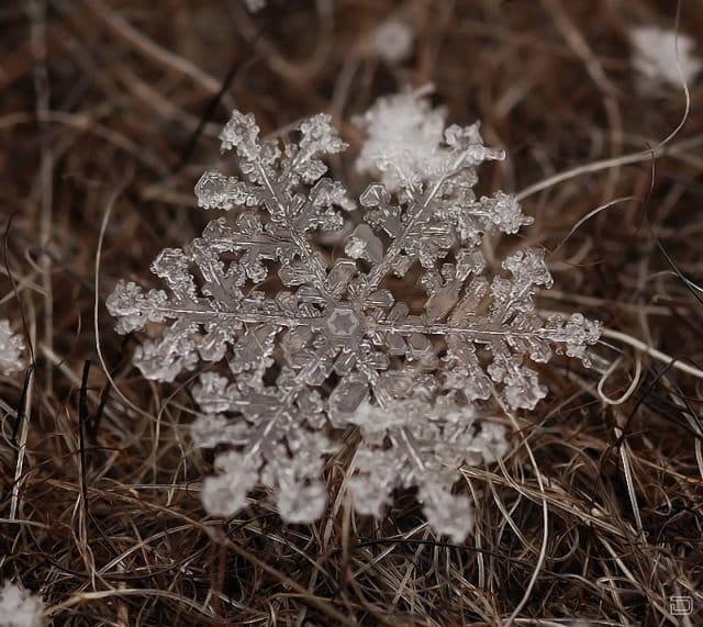 1265167647_marvels_of_winter_11