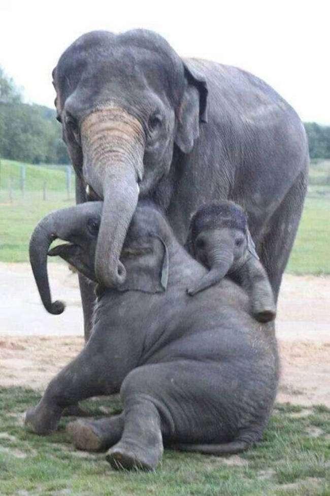 potret keluarga hewan