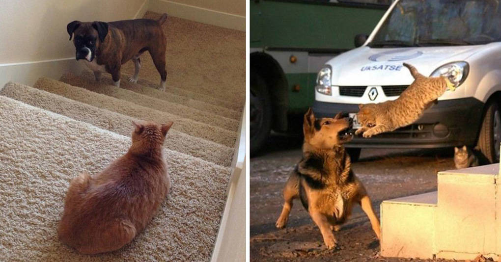 Когда кот в доме главный: 15 ну очень испуганных собак