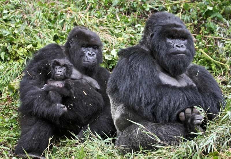 ae13-1-rwanda-mountain-gorilla-trekking-2