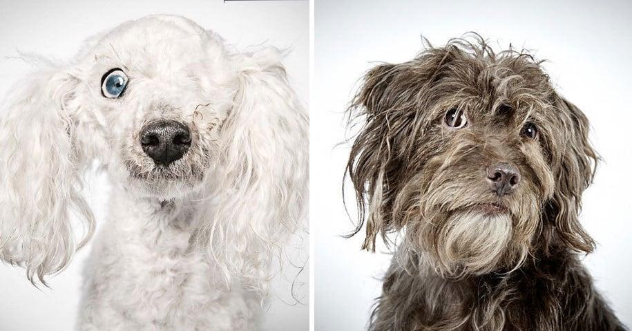 Модный фотограф помогает собакам из приюта обрести дом