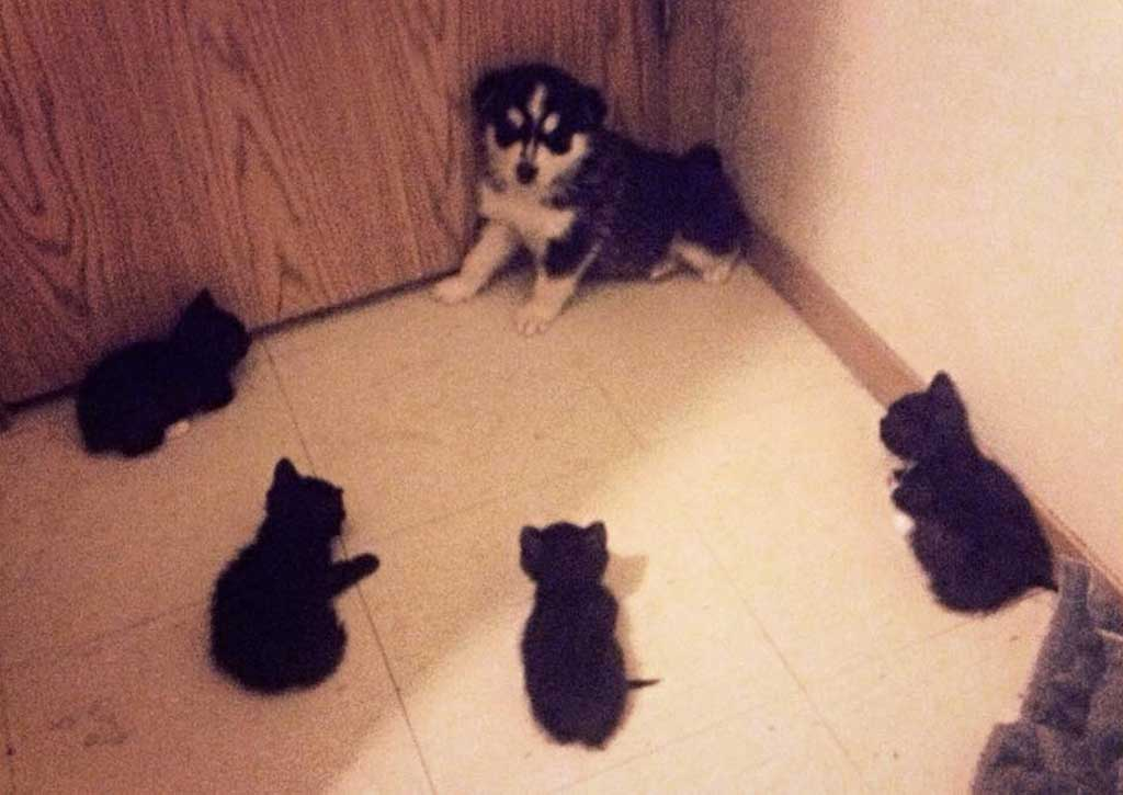 puppy-cornered-by-kittens