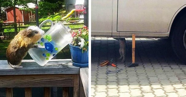 22 фото, где животные занимаются человеческими делами