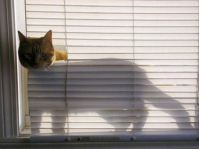 curious_cats_that_love_blinds