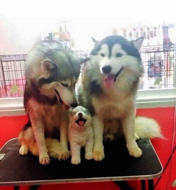 cute-dogs-045-44