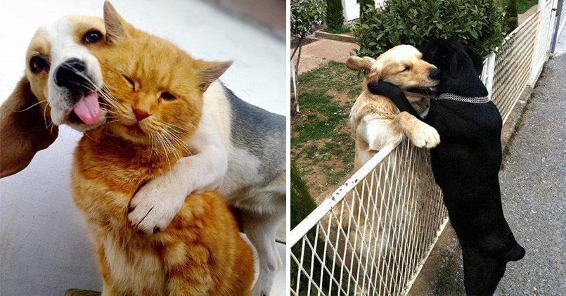 12 фотографий настоящей дружбы между животными