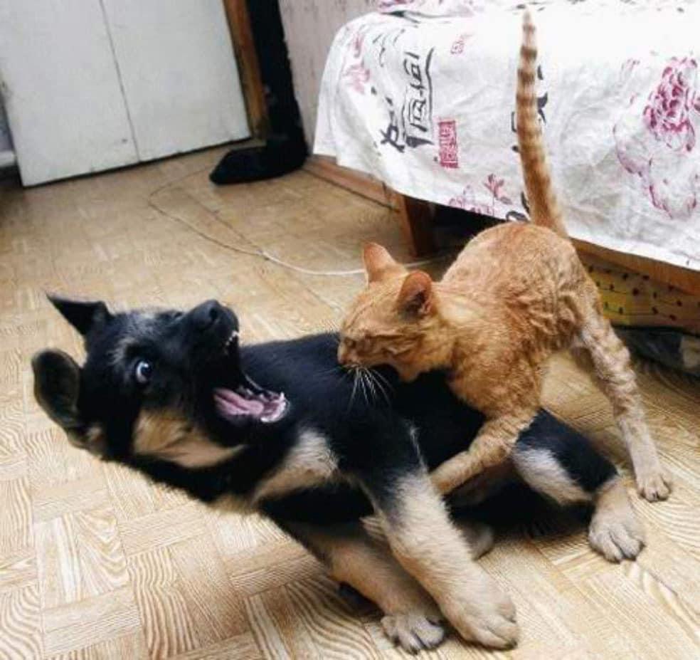 fierce-kitty1