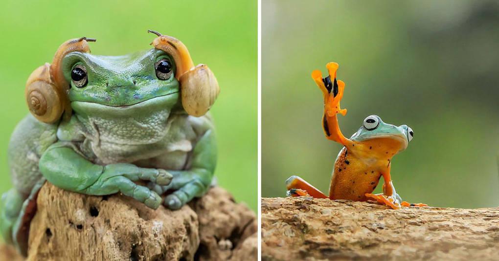 10 великолепных фотографий лягушек, какими вы их ещё никогда не видели