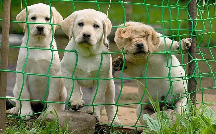 funny-tumblr-dog700