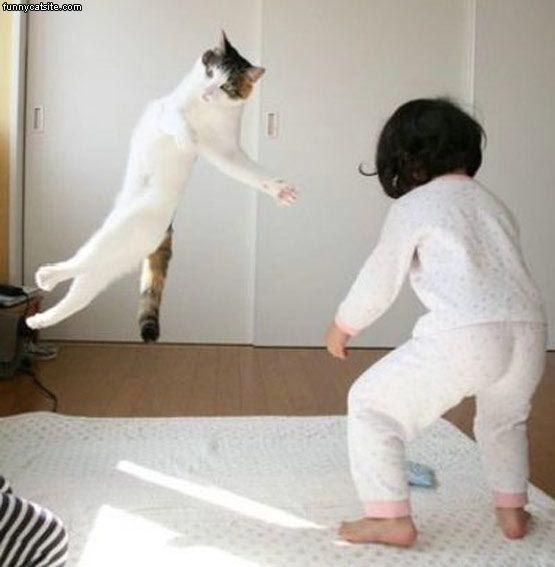 karate_chop_cat