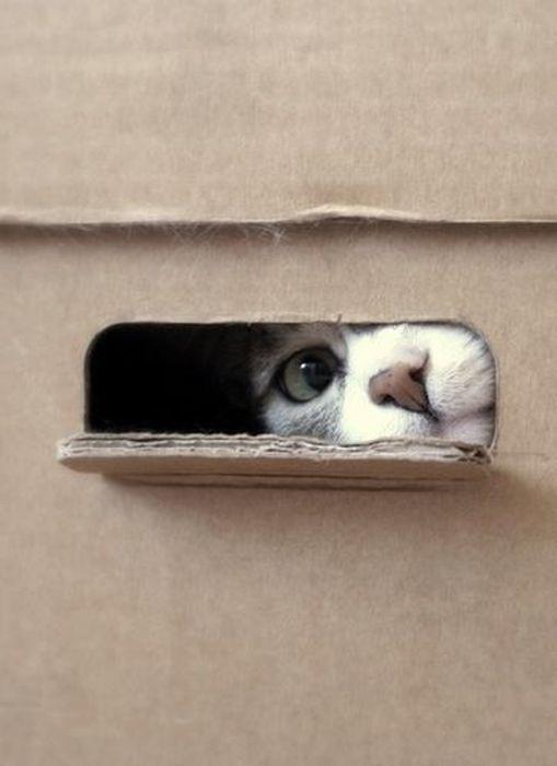 peeping_cats_07