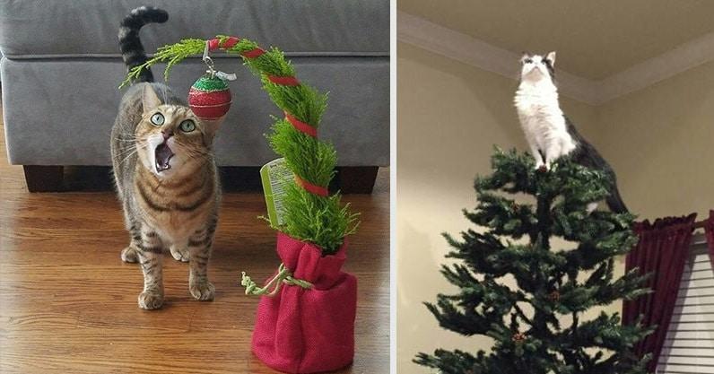 18 веселых котов, которые очень рады появлению ёлки на Новый год