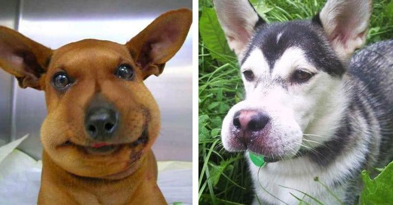 17 собак, которые съели пчелу
