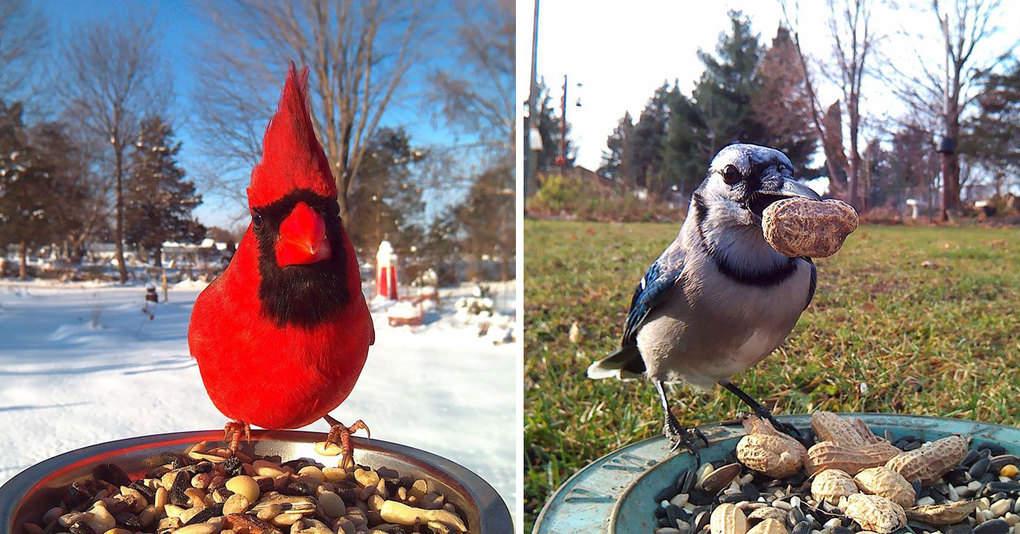 Она установила кормушку во дворе и весь год фотографировала птиц, которые прилетали покушать