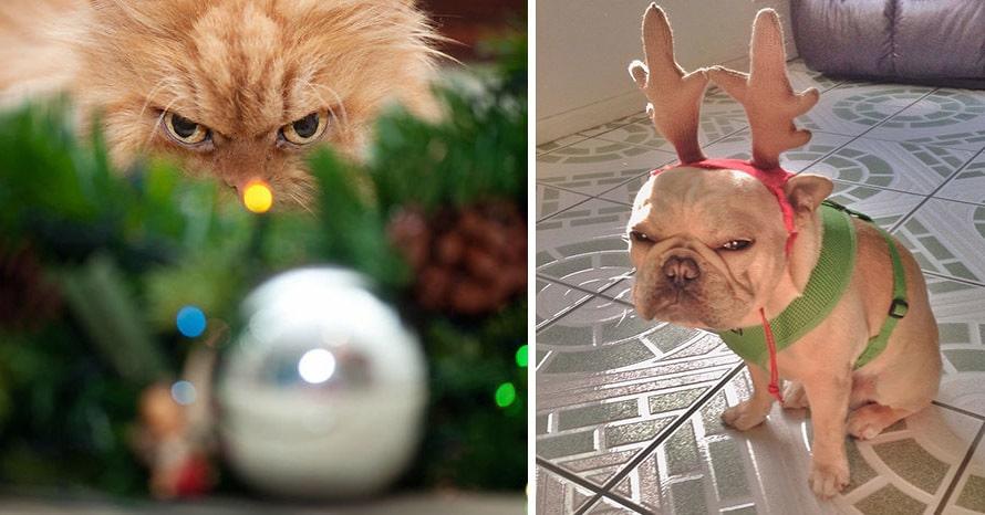 15 домашних животных, которые не очень любят Новый год