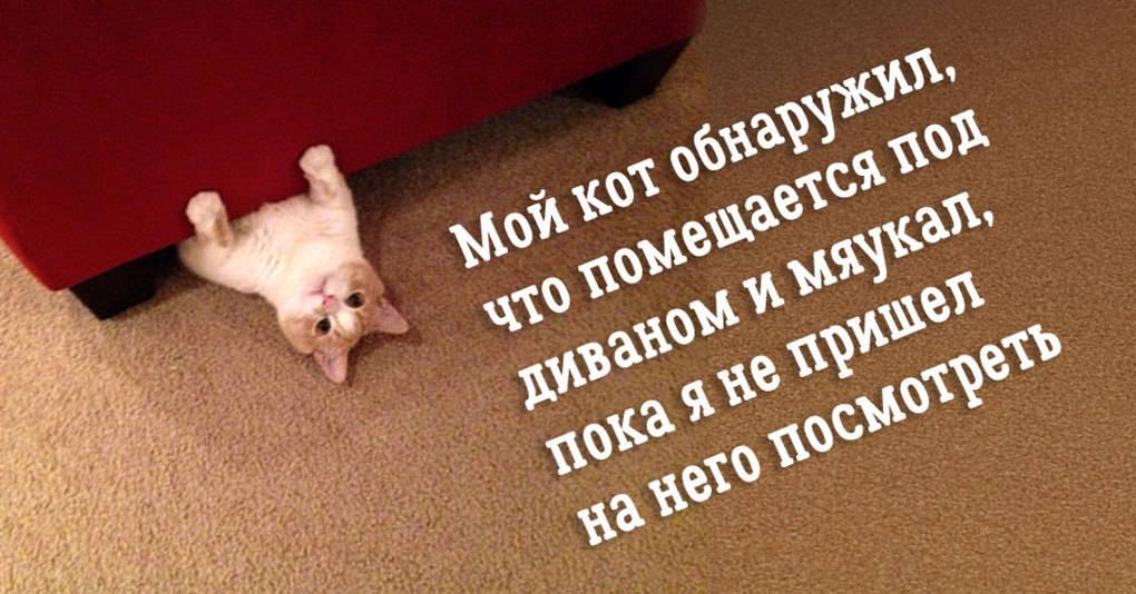 18 котов, над чьим поведением невозможно не смеяться