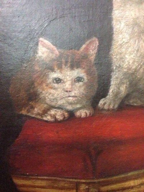 cats_mop