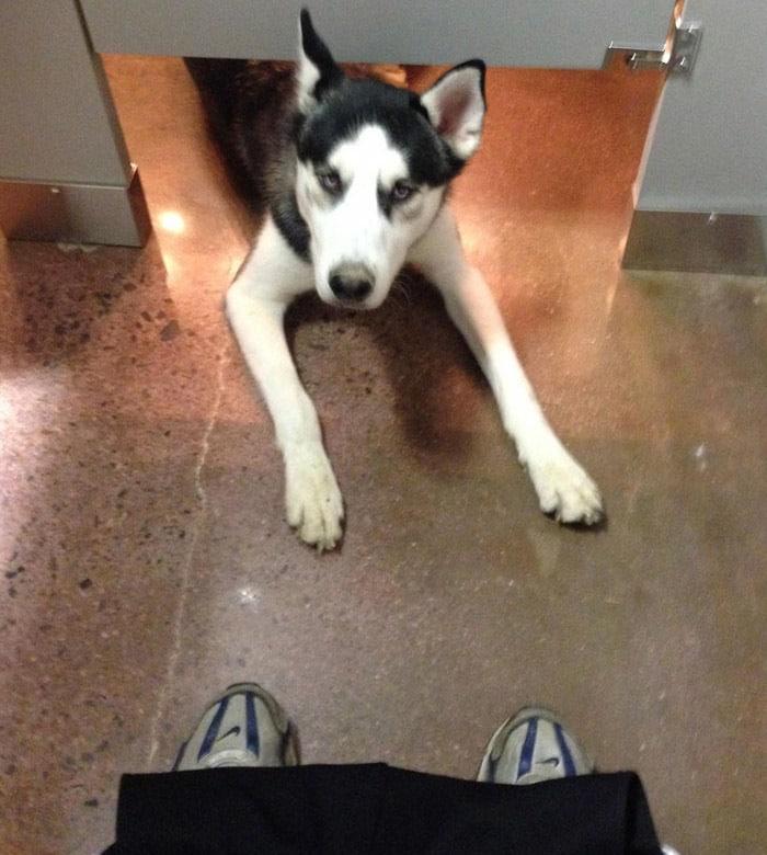 funny-husky-dog-posts-14-58343859ea072__700