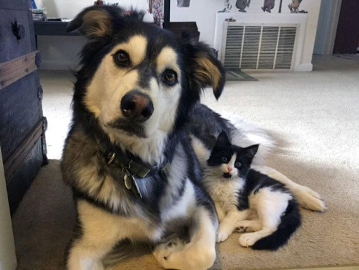funny-husky-dog-posts-44-583438acab9f7__700
