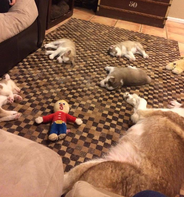 funny-husky-dog-posts-62-5834499200215__700