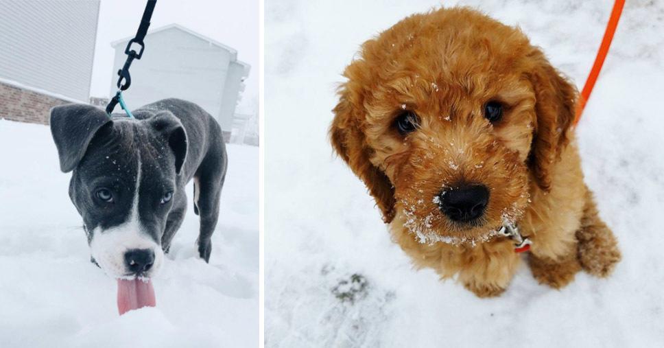 12 любопытных щенков, которые впервые увидели снег