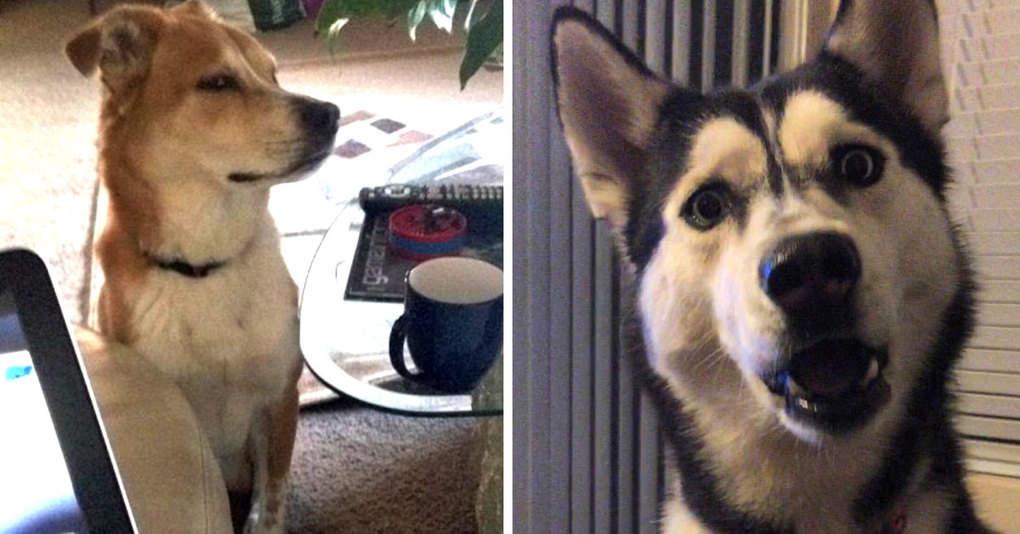 15 забавнейших собак, на которых невозможно не обратить внимание