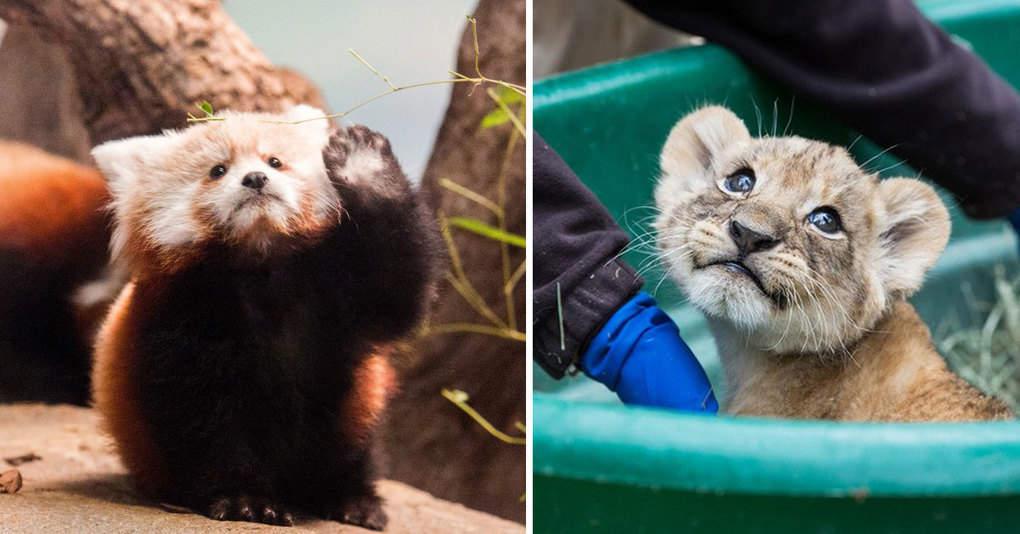 Зоопарки всего мира устроили конкурс на самое милое фото животных
